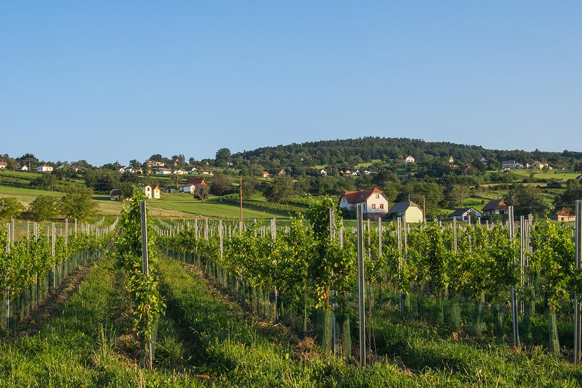 [Translate to Ungarisch:] Weingebirge-und-Buschenschenken